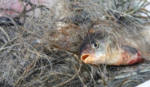 З початку липня Закарпатський рибоохоронний патруль зафіксував 42 порушення